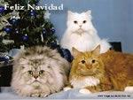 Imagenes de Navidad Gato