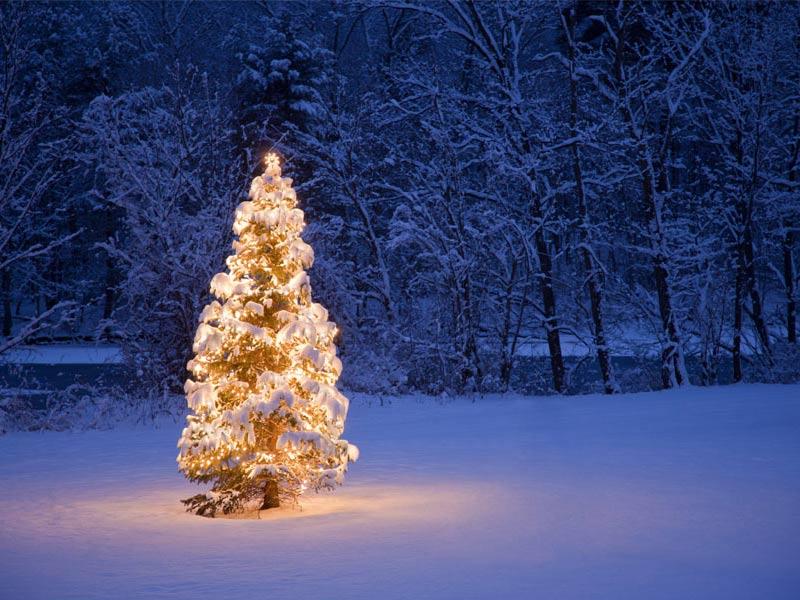 Imagen Árbol de Navidad Fondos