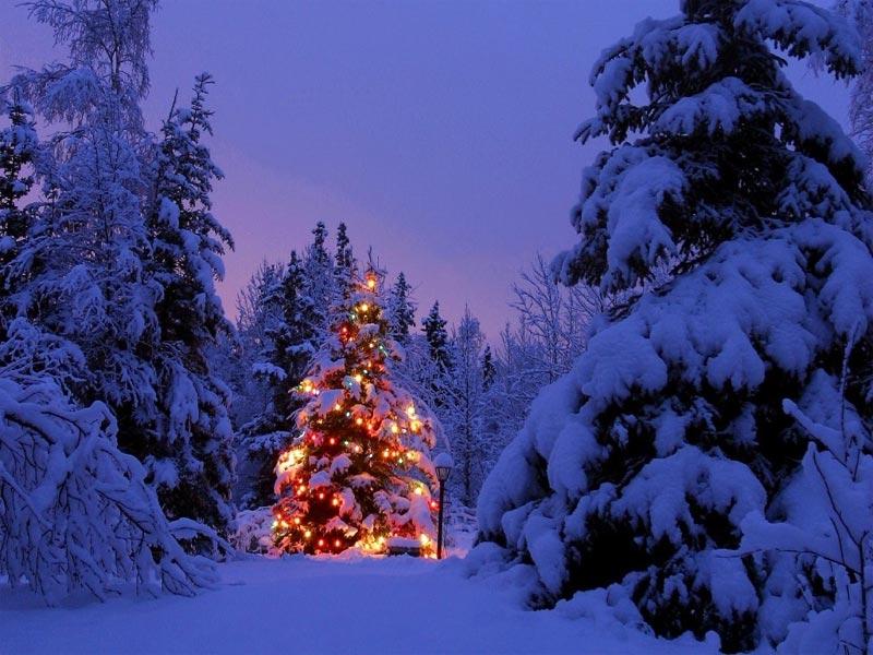 Imágenes Árbol de Navidad: árbol de Navidad Nevado