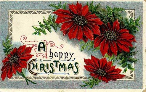 Fotos de Navidad: Fotos de Navidad Flor