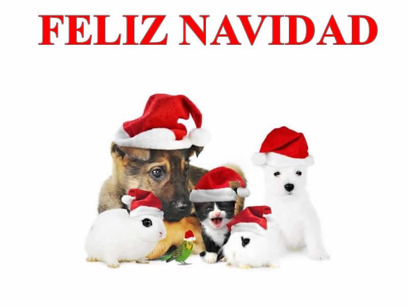 Imágenes de Navidad Animales