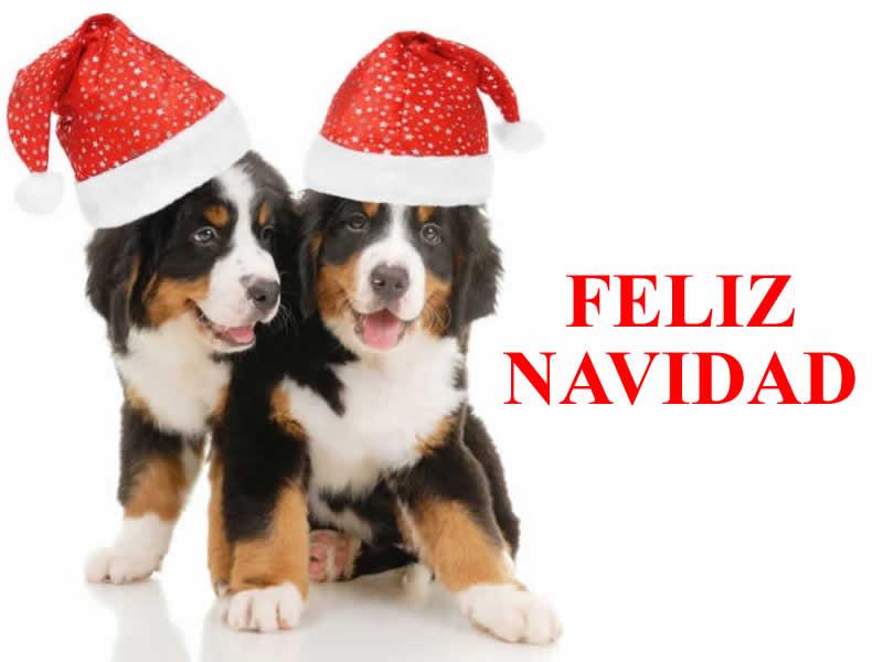 Imágenes de Navidad Perros